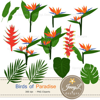 Tropical Bird of Paradise Floral digital paper and clipart SET