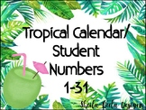 Tropical Calendar/ Student Numbers 1-31