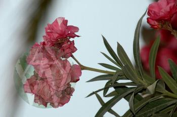 Tropical Flowers: Bird of Paradise, Bougainvillea, Orchid, Gardenia, & Hibiscus