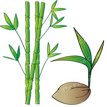 Tropical Garden Clip Art - Plants - Vegetation - Color & Blackline