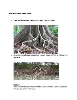 Tropical Rain Forests Summary Sheets and Worksheets