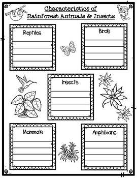 Tropical Rainforest Animal Classification Sort and Science Task