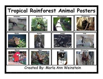 Tropical Rainforest Animals Bundle
