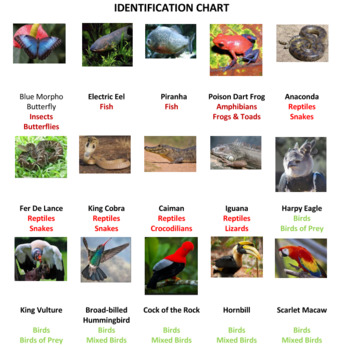 Tropical Rainforest Animals Jigsaw Puzzle