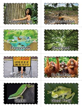 Tropical Rainforest Bingo Game