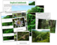 Tropical Rainforest: Cards and Charts
