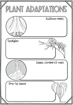 tropical rainforest ecosystem scribble notes by the lab tpt