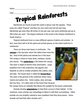 Tropical Rainforest Habitat