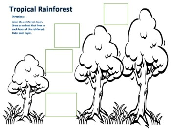 Tropical Rainforest Layer and Color