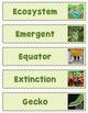 Tropical Rainforest Word Wall (40 Slips)