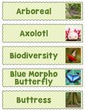 Tropical Rainforest Word Wall Bulletin Board (40 Slips)