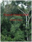 Tropical Rainforest Treasure Hunt