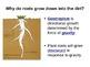 Tropism Lesson (Phototropism and Geotropism)