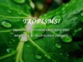 Tropism PowerPoint