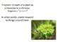 Tropism SMART notebook presentation