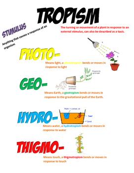 Tropisms Anchor Chart