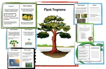 Tropisms Lesson Plan