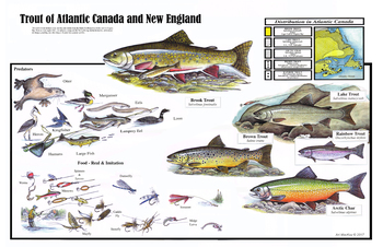 Trout and Char of Atlantic Canada and New England