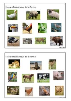 Trouve les animaux de la savane et de la jungle