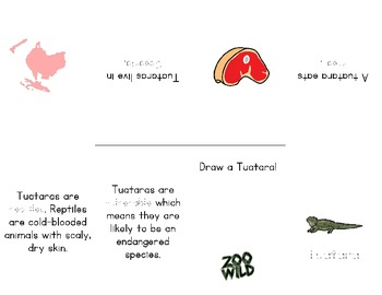 Tuatara -- 10 Resources -- Coloring Pages, Reading & Activities