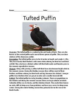 Tufted puffin - lesson information facts review questions