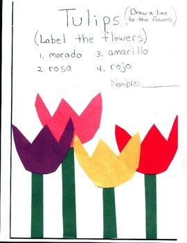 Tulips Colors in Spanish
