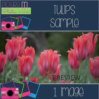 Tulips Free