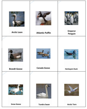 Tundra Animals Anagrams