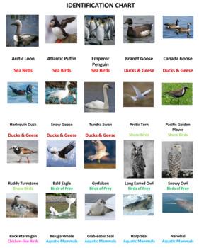 Tundra Animals Dominoes