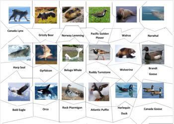Tundra Animals Jigsaw Puzzle