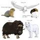 (Arctic) Tundra Animals Realistic Clip Art