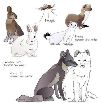 Arctic Tundra Animals Realistic Clip Art
