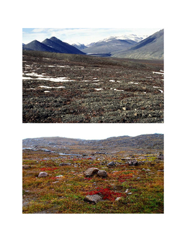 Tundra Biome Teacher's Resource Guide & Pictures