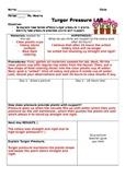 Turgor Pressure Celery Stick LAB