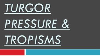 Turgor Pressure & Plant Tropisms