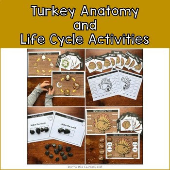 Turkey Anatomy and Life Cycle Activities
