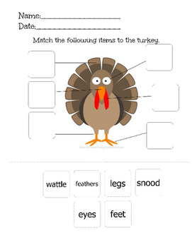 Turkey Body Parts Match-3 Levels