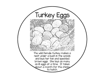 Turkey Lifecycle Craft
