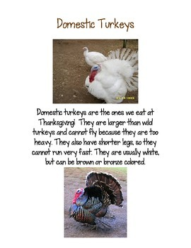 Turkey Facts For Kinders!