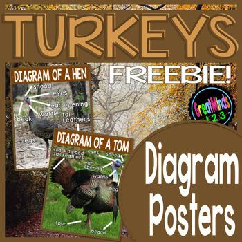 Turkeys Freebie {Non-fiction text, Main Ideas Worksheet, Writing, & Poster}