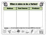 Turkey Habitat, Food Resources, and Predators!