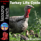 Turkey Life Cycle Reader