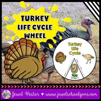 Animal Life Cycle Activities (Turkey Life Cycle Craft)