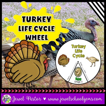 Animal Life Cycle Activities (Turkey Life Cycle Craft)