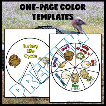 Animal Life Cycle and Thanksgiving Science Activities (Turkey Life Cycle Craft)