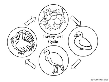 Turkey Life Cycle {3D Life Cycle of a Turkey Craft}