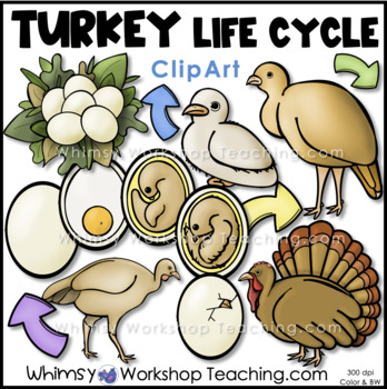 Turkey Life Cycle Clip Art - Whimsy Workshop Teaching