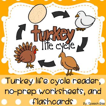 Turkey Life Cycle Thanksgiving Reader