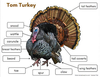 Turkey Life-Cycle Spinner and 3-Part Cards