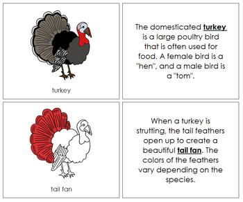 Turkey Nomenclature Book (Red)